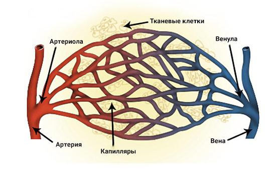 Микроциркуляция