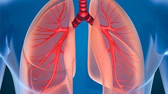 人間の呼吸器系解剖