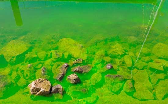 녹색 페인트로 오염된 물