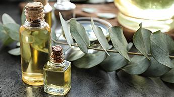 Benefici olio di eucalipto
