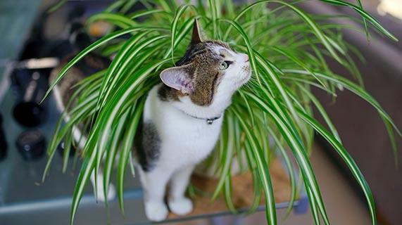 화초와 고양이