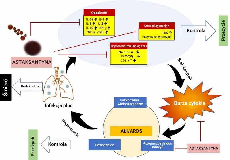 korzystne działanie astaksantyny