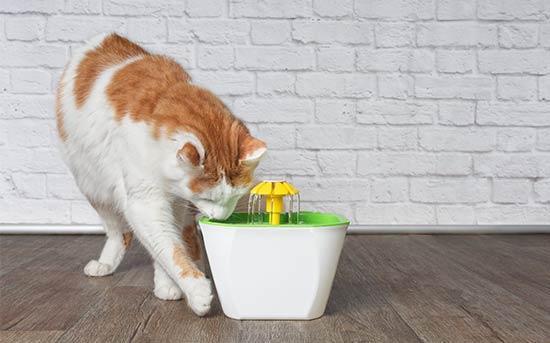 고양이 급수기
