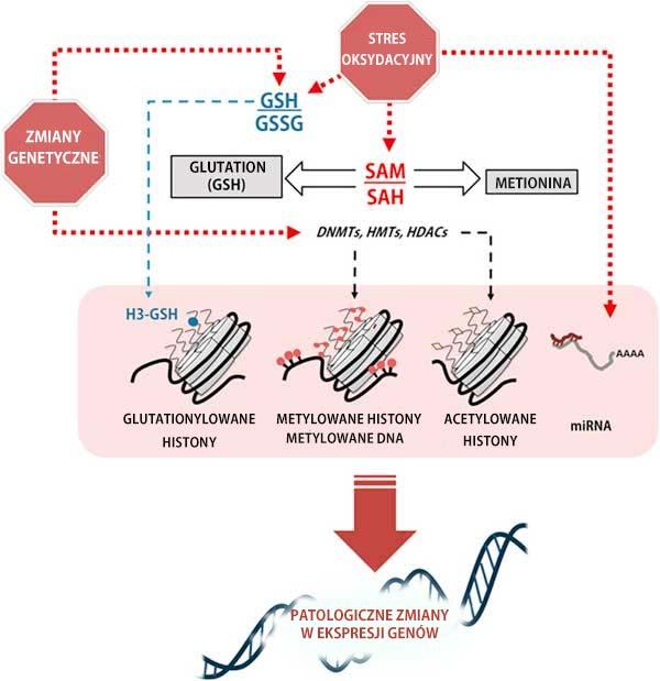 Patologiczne zmiany w ekspresji genów