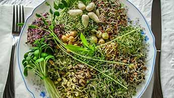 consommer des graines germées