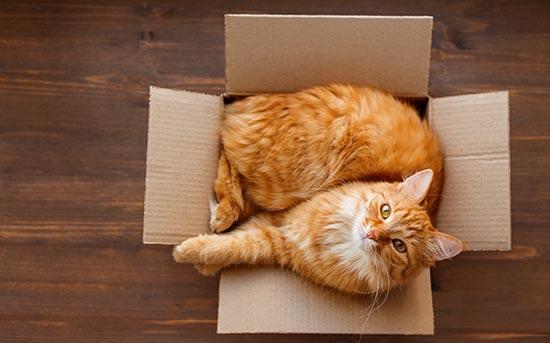 상자 안의 고양이
