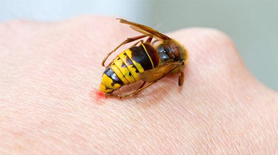 ミツバチ 毒