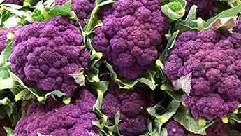 紫 カリフラワ