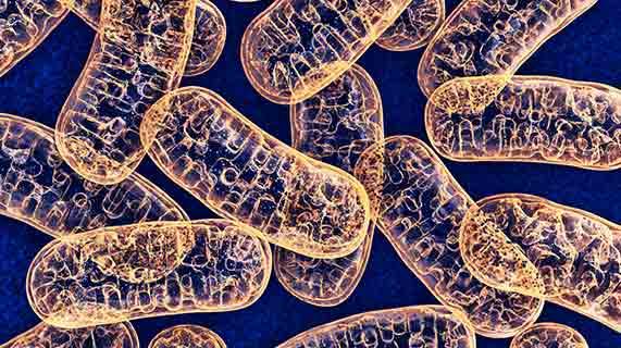 Saúde mitocondrial