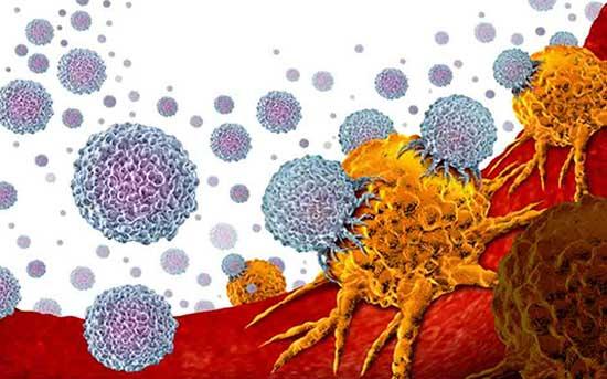장내 미생물 영향