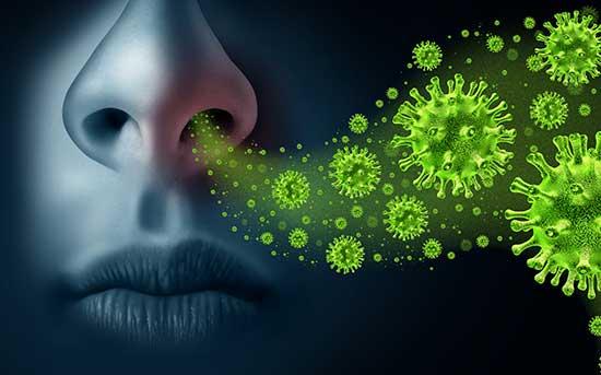 코 바이러스 감염