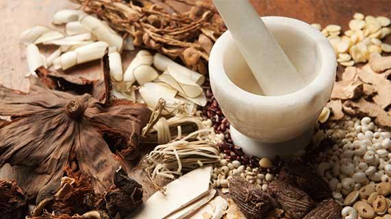 cogumelos medicinais