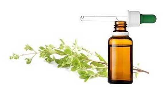 Usado por milhares de anos, o óleo de manjerona oferece muitos benefícios