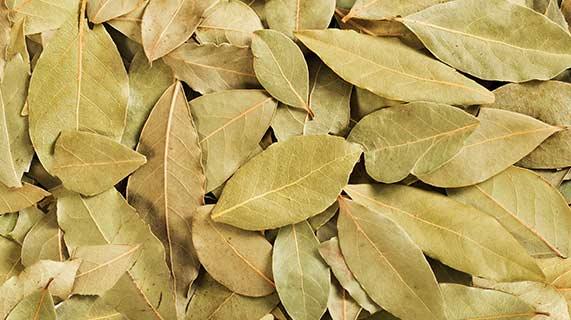 Esta planta comum pode ajudar a no tratamento de diabetes e pressão arterial?