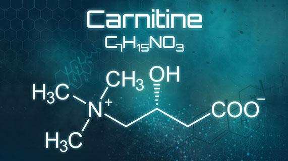 carnitine métabolisme