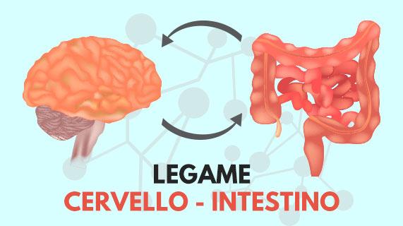 legame alzheimer intestino