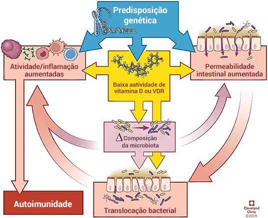 Como a vitamina D contribui para as doenças autoimunes