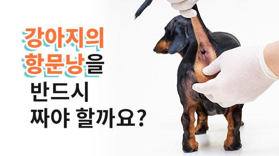 강아지 항문낭