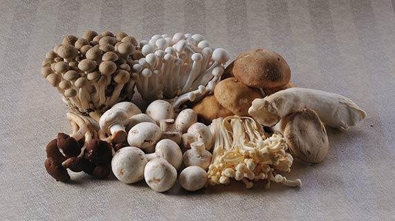 groupe de champignons