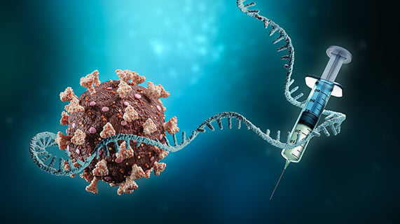 protéine spike