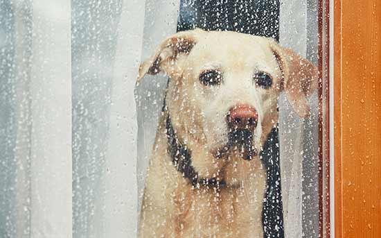 우울한 강아지