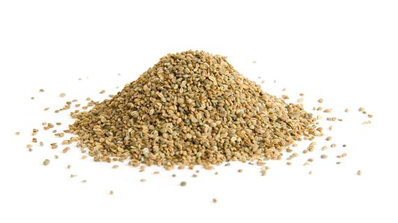 Benefícios da semente de aipo