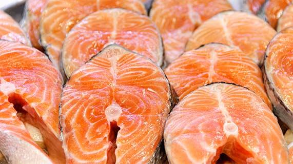 salmone norvegese da allevamento