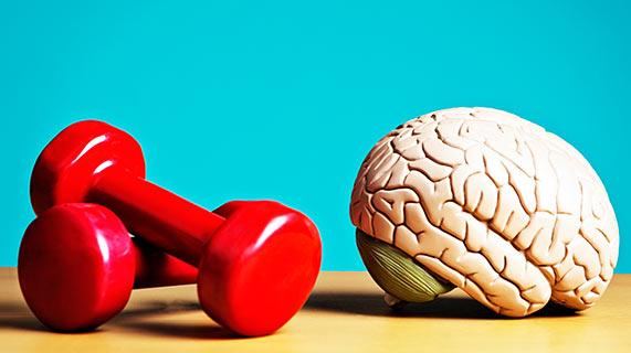 근육과 뇌