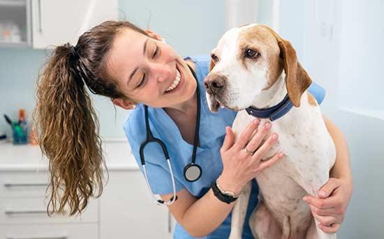 개 수의사
