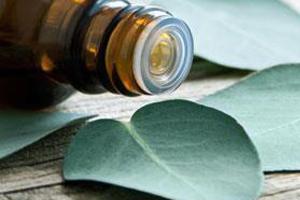 Huile et feuilles d'eucalyptus