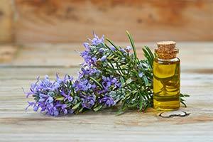 Óleo de Alecrim: O Perfume do Bem-Estar