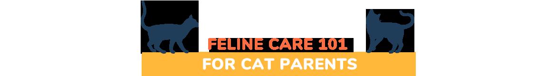 Feline Care 101 for Cat Parents