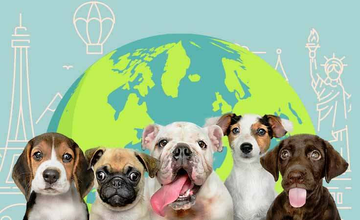 Dogs Around the World