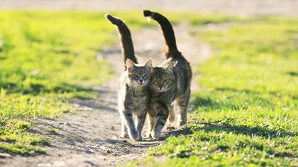Estas dos mujeres quieren ayudarte a mantener tu gato saludable