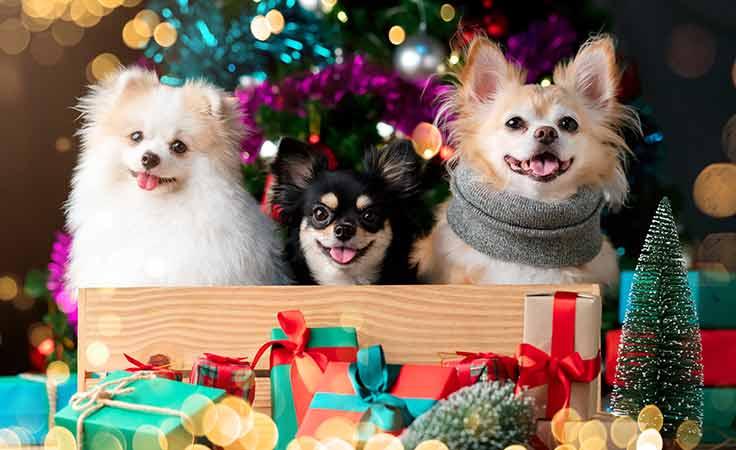 Merry Furry Christmas