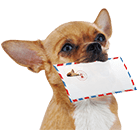 dog carrying mail