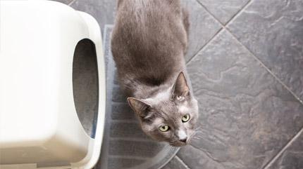 Indoor Urination