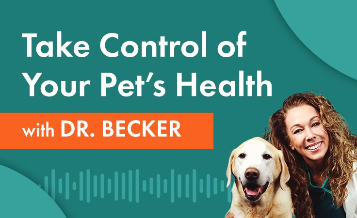 Let's Talk Healthy Pets Podcast