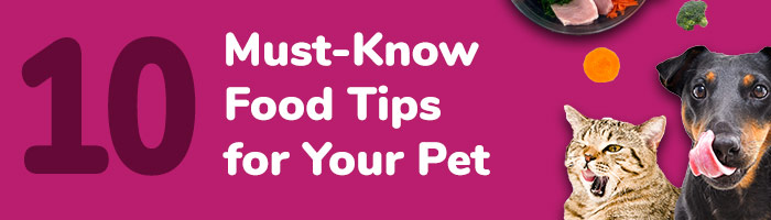 5 Must Know Food Tips for Your Pet