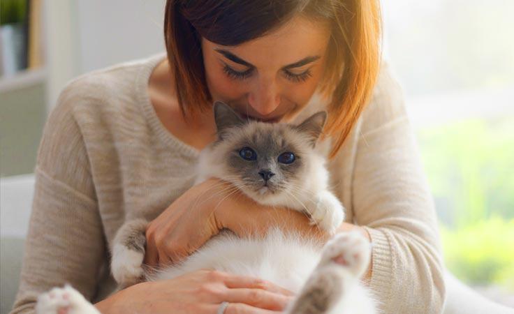 Feline Care 101