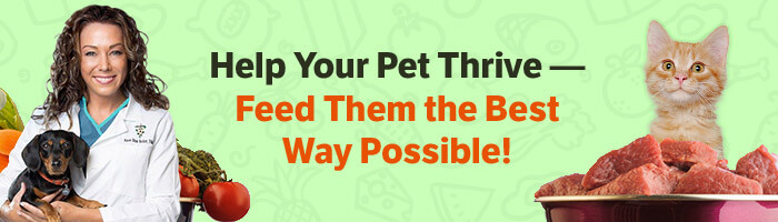Pet Food Top Tips