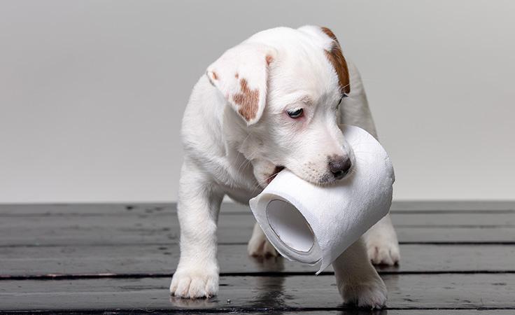 Pet Digestive Headquarters