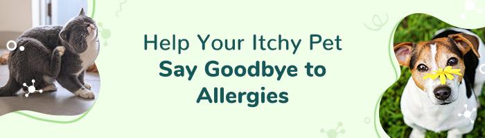 Say Goodbye to Seasonal Pet Allergies