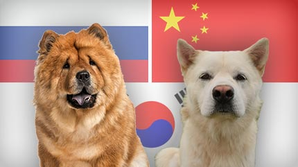 Dogs Native to Russia, China and South Korea
