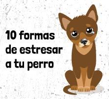 10 formas de estresar a tu perro