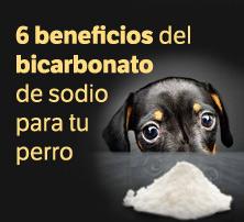 6 beneficios del bicarbonato de sodio para tu perro