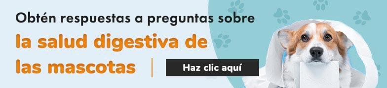 Obtén respuestas a preguntas sobre la salud digestiva de las mascotas