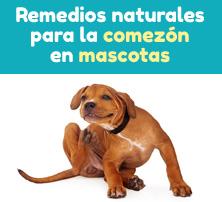 Remedios naturales para la comezón en mascotas