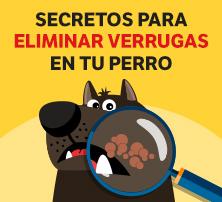 Secretos para eliminar verrugas en tu perro