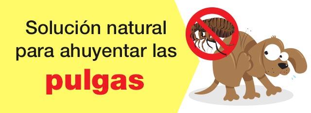 Solucion natural para ahuyentar las pulgas